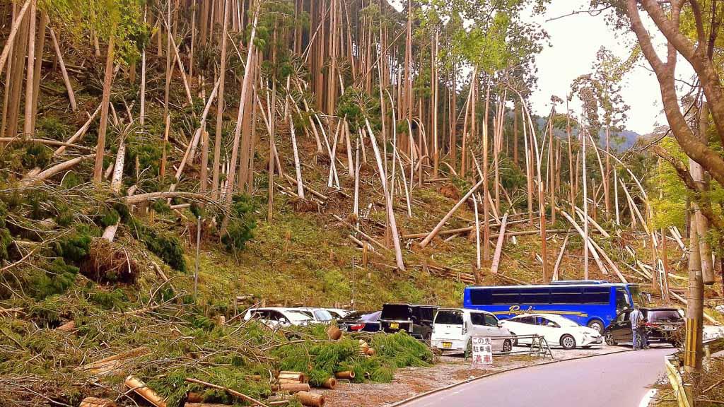 fallen-trees-1