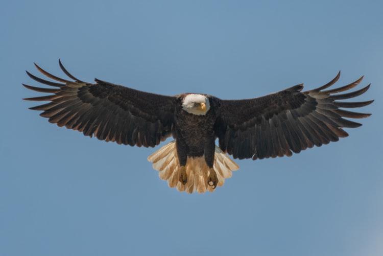 L'Aquila che credeva di essere un Pollo